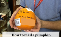 Learn how to mail a pumpkin